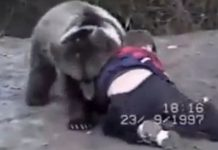 Khabib Nurmagomedow Wrestling With a Bear
