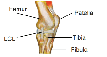 BJJ Knee Injuries LCL tear
