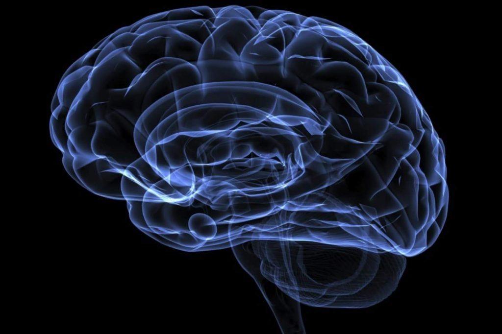 brain nootropics 1024x682 - Nootropics: A Hack To Improve Your BJJ Performance
