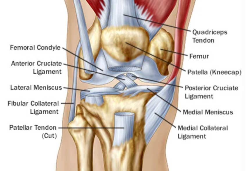 BJJ knee Injury