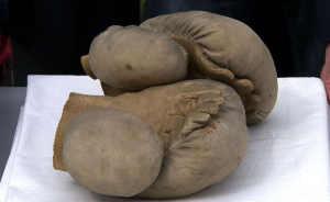 Mufflers Muay Thai Gloves
